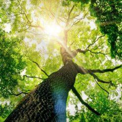 tenture nature arbre de vie