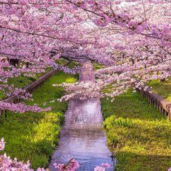 tenture japonaise cerisier bord de rive Meguro Gawa