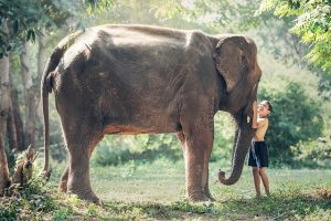 elephant animal protecteur